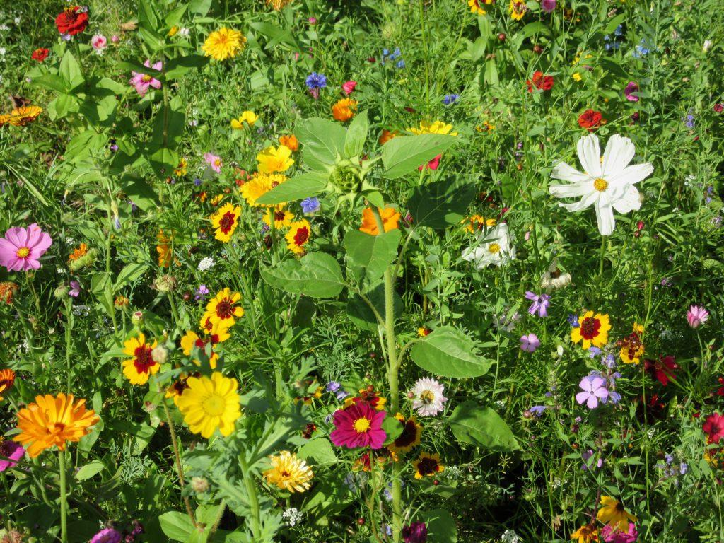 Termine - Blumenwiese